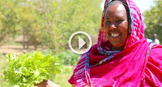 Somalia Agrifood Fund