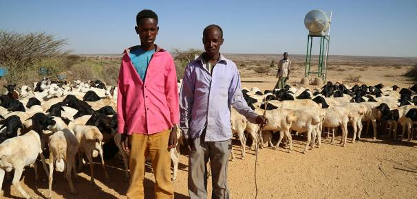 Somali Farming and Agriculture