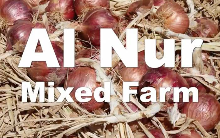 Al Nur Mixed Farm