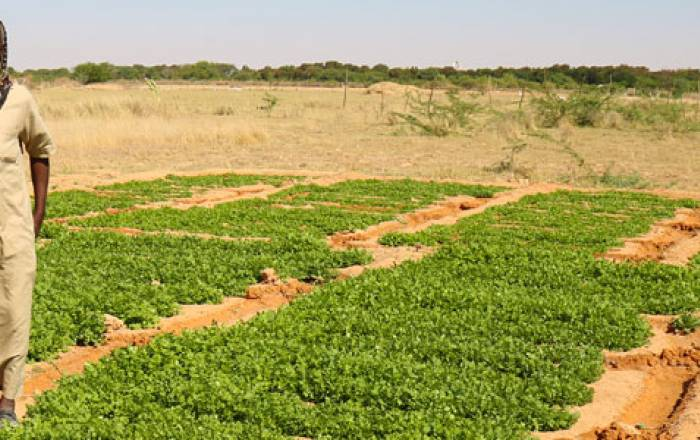 Hodan Mixed Farm Somalia