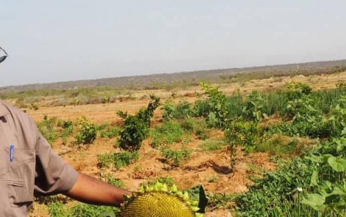 Kaah Beekeeping Somalia