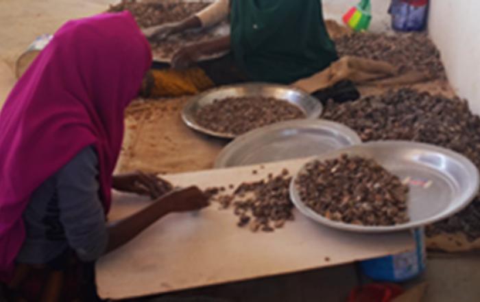 Allamagan gums processing somalia