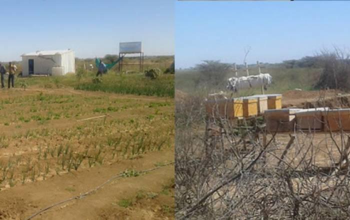 Dualeh Farm