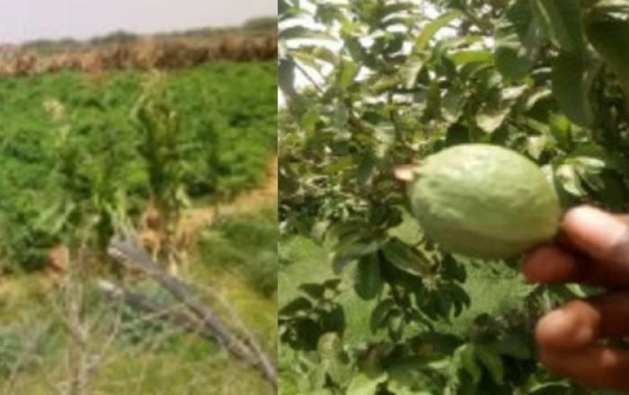 Rahoo Farm - Invest in Somalia