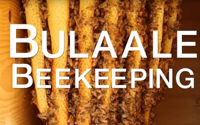 Somalia Beekeeping