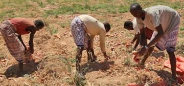 Al Nur Somali Farming
