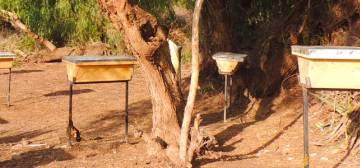 Rasmi Beekeeping Company Somalia