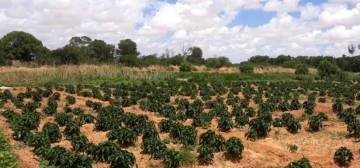Barisamaad Farm | Somali Agriculture