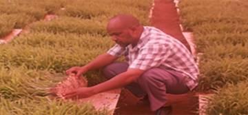 Ugbaad Agrocare Somalia