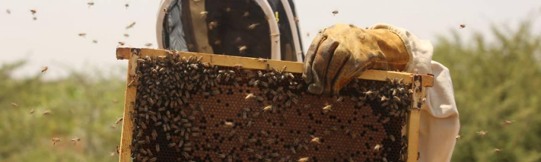 Bulaale Beekeeping Somalia