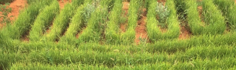Mudug Agrolive Farm Somalia