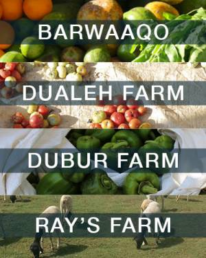 Somali Agrifood Case Studies